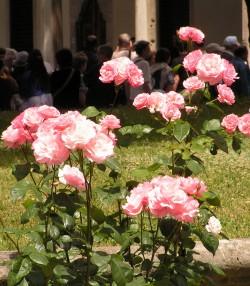 Розы во дворце Топкапы