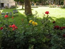 Клумба с розами у мечети Султанахмет