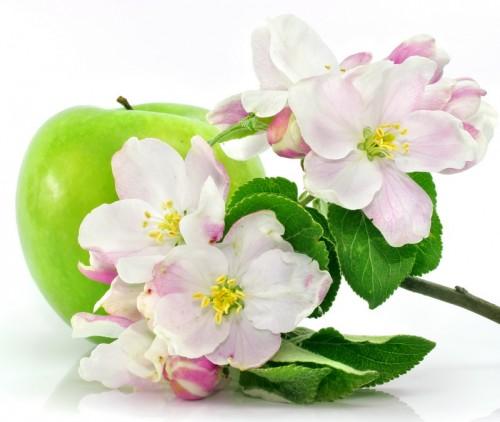 Яблоко и яблоневый цвет - символ молодости, красоты и здоровья