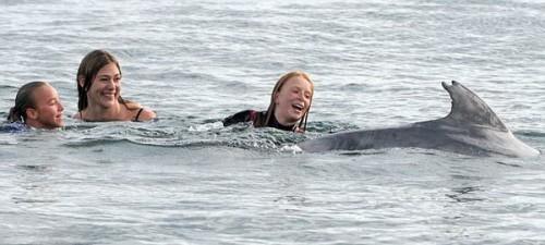 Дельфин Джордж плавает с детьми у побережья Девона (Англия)