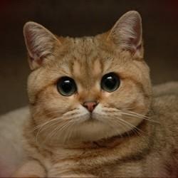 Кошки вовсе не ленивы - у них просто слабая мотивация.