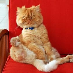 У собаки есть хозяин, у кошки - слуга.
