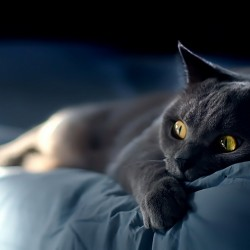 Кошки и кровати отлично подходят друг к другу.