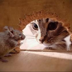 В мышей превращаются люди, которые в прошлой жизни не любили кошек.