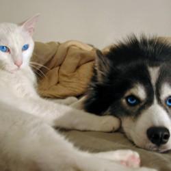 Собаки верят, что они люди. Кошки верят, что они боги.