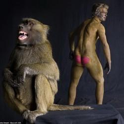Ani-Human - серия портретов. Человек и бабуин