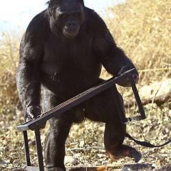 Канзи устанавливает решетку для гриля