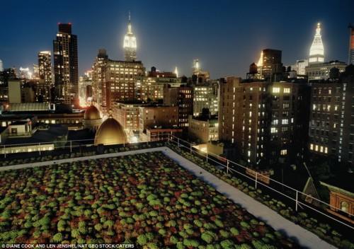 Зеленые крыши на Манхэттене в Нью-Йорке