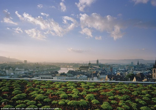 Сады на крыше с красивым видом, Германия