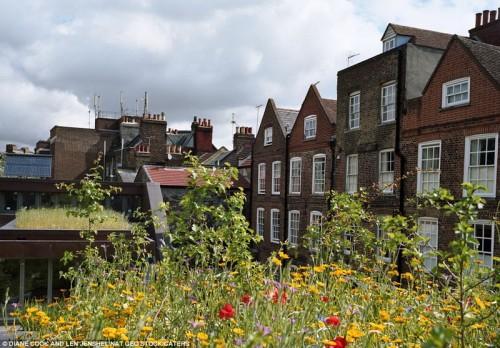 Цветники на крыше дома в районе Излингтон, Лондон