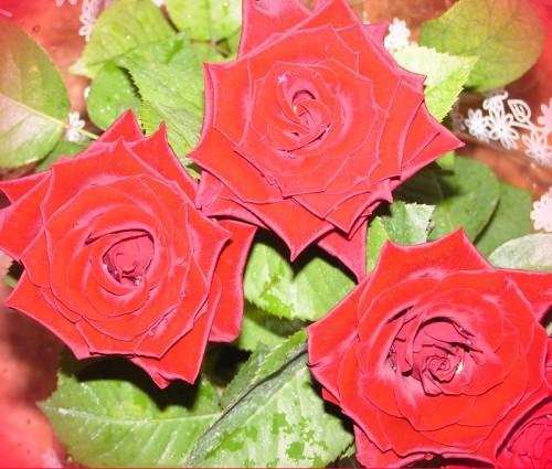 В день Святого Валентина для вас букет алых роз!