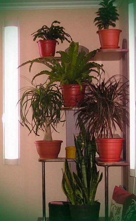 Стойка для домашних растений
