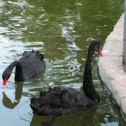 GRAND HABER HOTEL - лебеди в мини-зоопарке