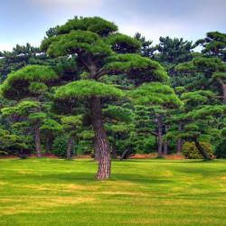 Изумрудный лес