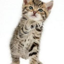 Милый котенок: И вам здравствуйте!