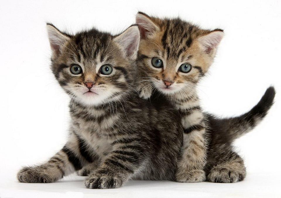 Лучший друг человека- кошка или собака?