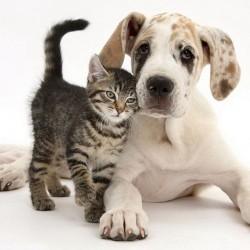 Котенок и щенок. Друзья навек!