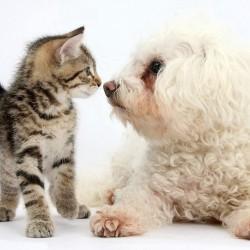Котенок и щенок нос к носу