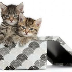 Котята в коробке: Вот это подарок!