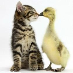 Котенок и утенок: Ты кто?