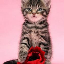 Гламурный котенок с цветком